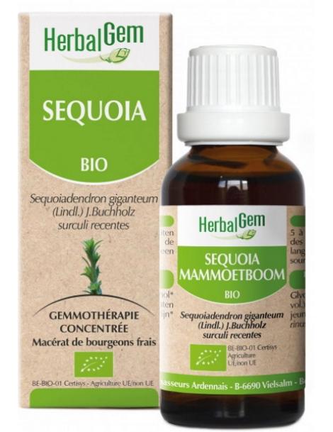 Sequoia bio 50ml Gemmobase Herbalgem