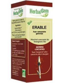 Erable bio 50ml Gemmobase Herbalgem