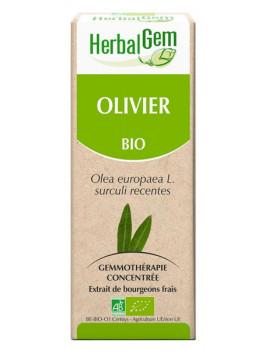 Olivier bio 50ml Gemmobase Herbalgem