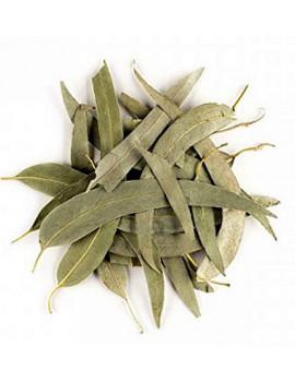 Eucalyptus feuilles longues entières bio 100g Herboristerie de Paris tisane hiver et vitalité Abcbeauté