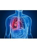 Bronches Poumons